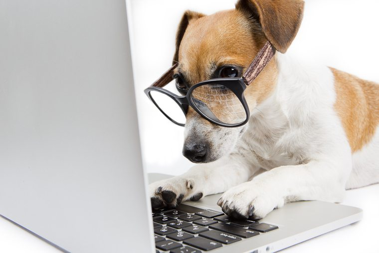 dog-working-on-laptop