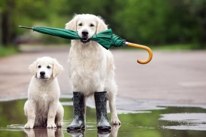 dogs-with-umbrella-in-the-rain